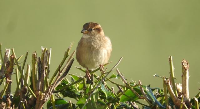 Sparrowfblog